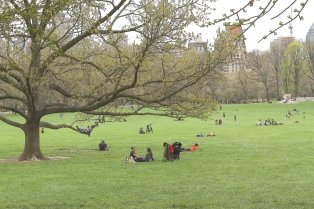 Sheep Meadow Central Park