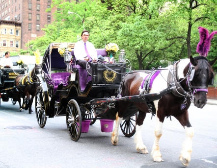 13 IMG_9867 7D carriages on 10th avenue