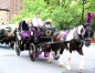 Carriages of Central Park