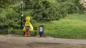 Big Bird Central Park