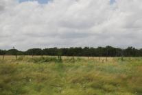IMG_2611texas field