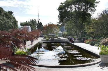 Brooklyn Botanical Gardens Lilly Ponds