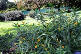 Brooklyn Botanical Gardens