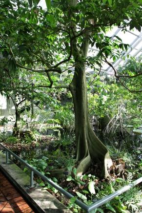 Brooklyn Botanical Gardens Conservatory