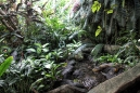 Brooklyn Botanical Gardens - Rain Forest