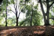 At Brooklyn Botanical Gardens