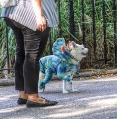 20171021 IMG_6198 7D dragon dog