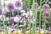 05162017 IMG_9889 7Dsm floral at col circ sm