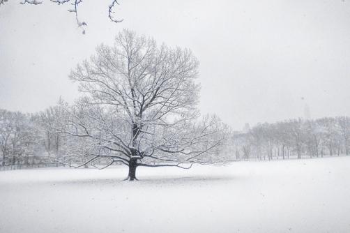12092017IMG_9195 7D tree in sheeps meadow sm
