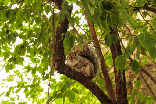 20171013 IMG_5589 7D Squirrel in Central Park