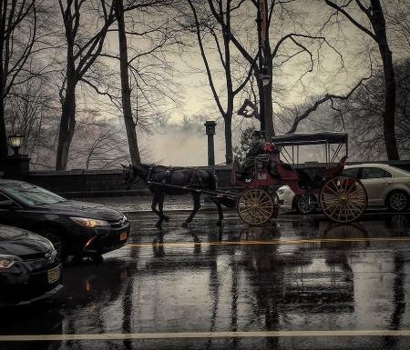 IMG_3139 horse