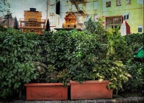 IMG_5611 small garden sm
