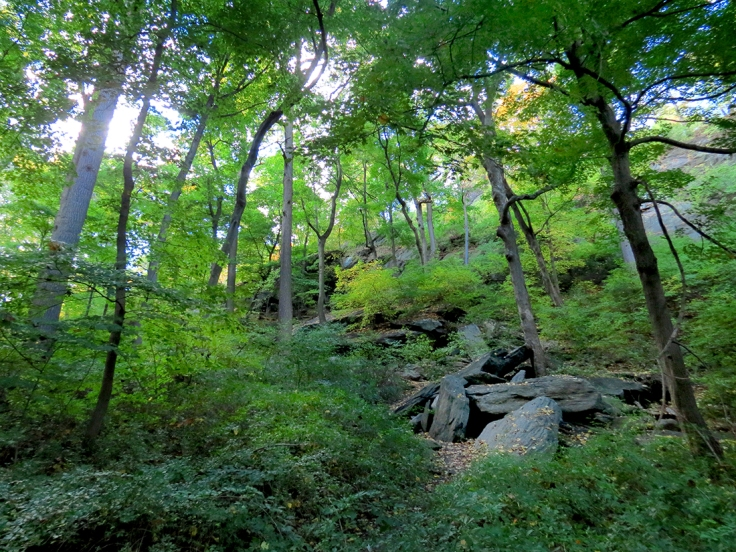 03a 10 - Inwood Hill Park - 10-23-16 - IMG_4193Asm